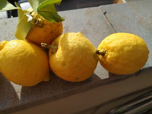 i-limoni-di-pettineo