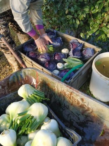 campo-verdure